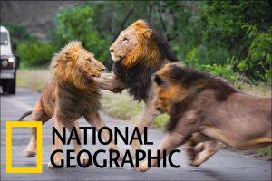 National Geographic Solo Safari